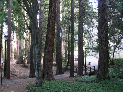 Eucalyptus path