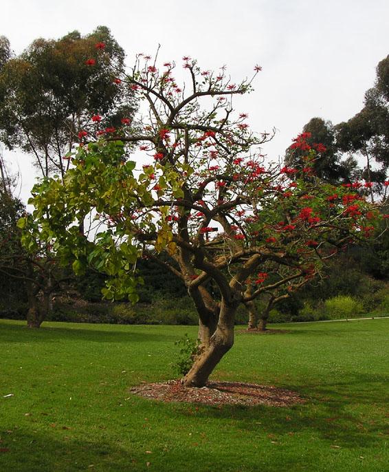 P5150017.Tree