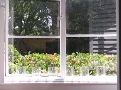 2004 September - Newglasses
