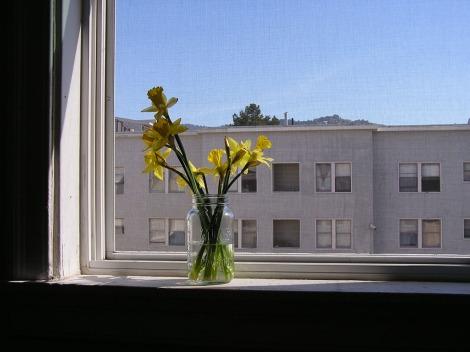Daffodils like a painting