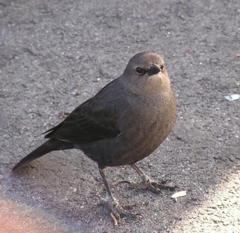 P2060105.Slightly cranky looking bird