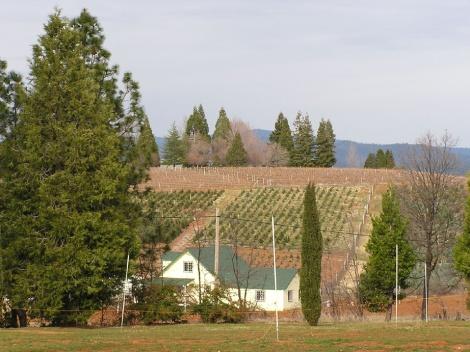 P2140002.Farm on Apple Hill