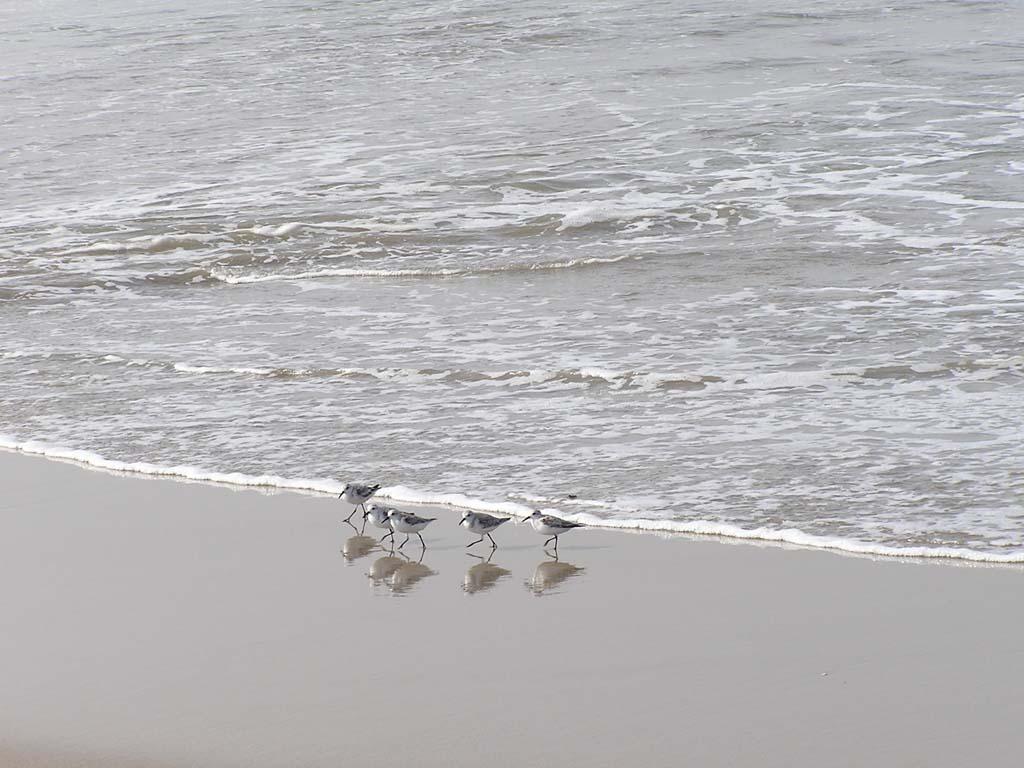 16.Birds