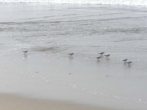 17.Birds