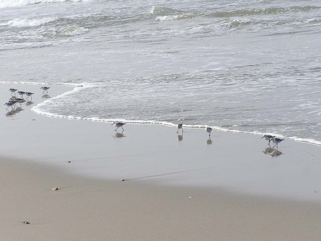 18.Birds running away