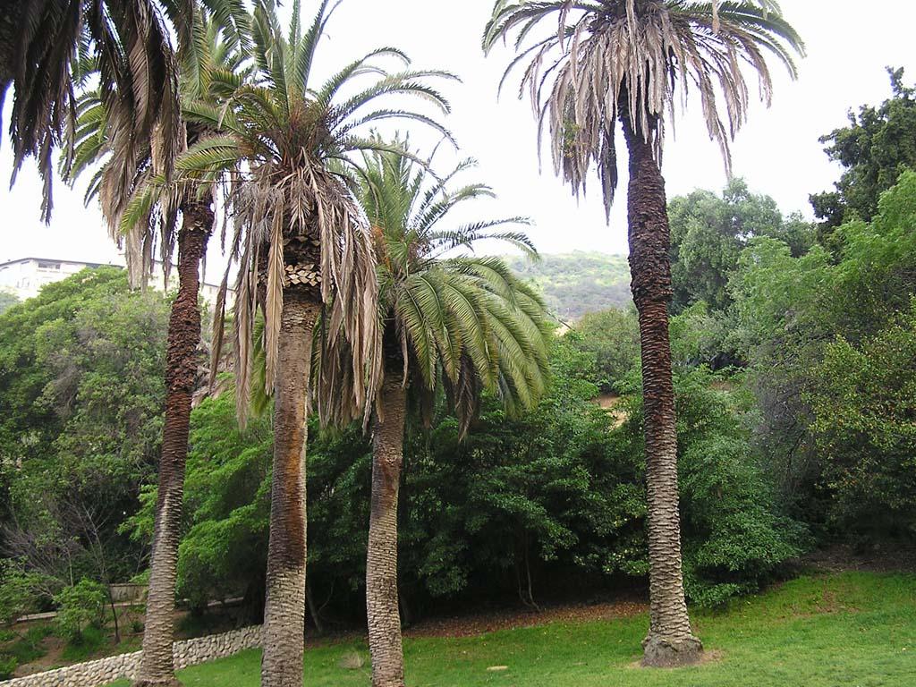 43.Palms