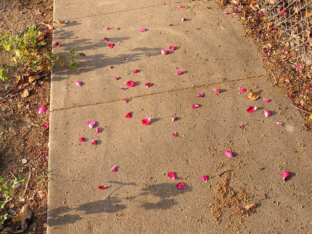 78.Petals