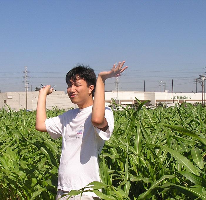 Cornbug