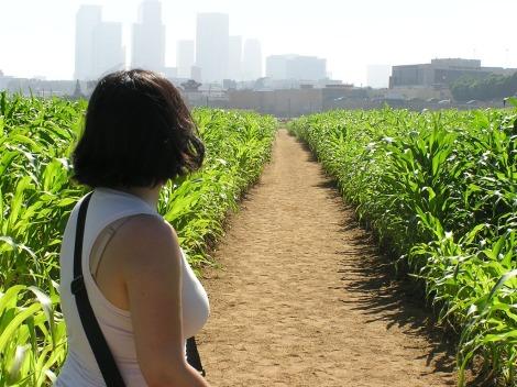 Into the land of corn (original)