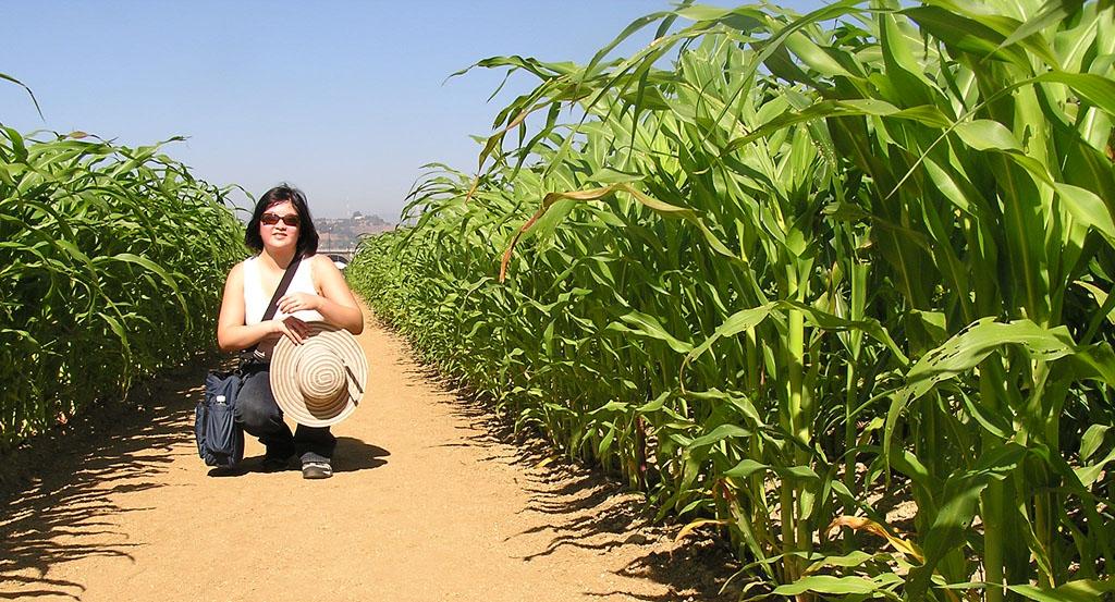 Lisa kneeling in the corn
