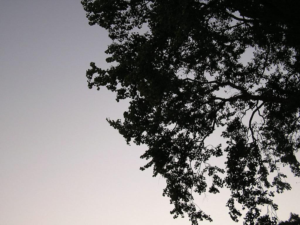 PA140275.Canopy