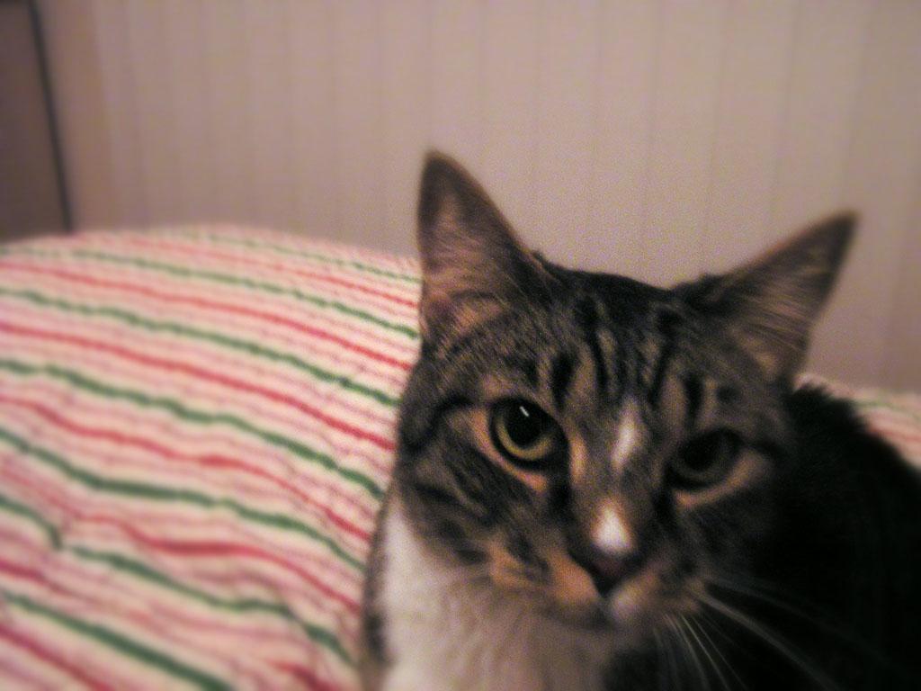 2006 April 28 - Handsome Tisha
