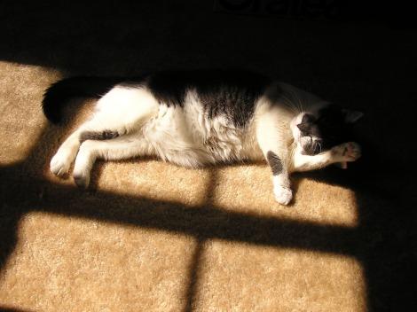 Lyapa bathing in the sunlight