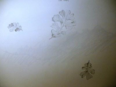 Drawings5 010