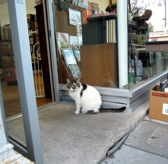 Cat outside a bookstore