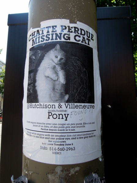 """Lost cat"" flier in French and English"