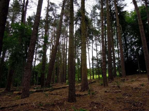 Woods in Linn Park