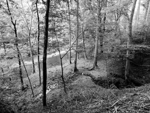 The White Cart Water glimpsed through the trees (b/w)