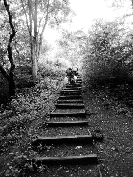 Two women walking their dogs up some steps (b/w)