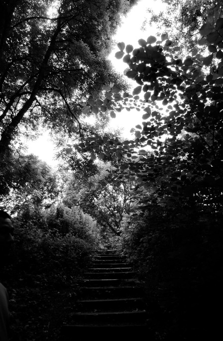 Light and shadow play in the treetops (b/w)