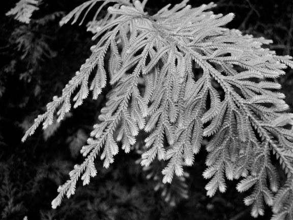 Delicate fern tips
