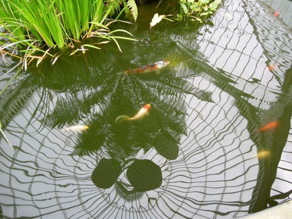 Reflection of the glasshouse roof in the koi pond
