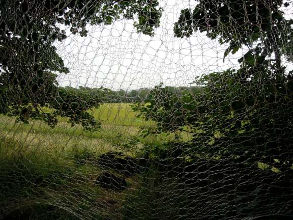 Fishing line knitted into a lacy pattern, against the backdrop of trees and fields