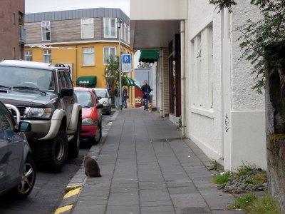 Big grey-brown cat on a sidewalk