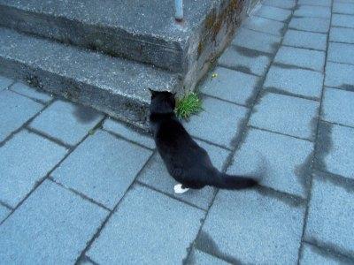 Black cat with white socks