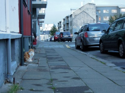 Fluffy orange and white cat on a doorstep