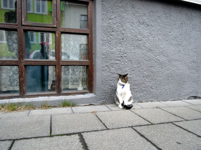 Calico cat sitting by a low window