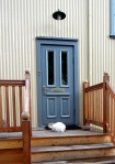 Mostly white cat sitting on a doorstep