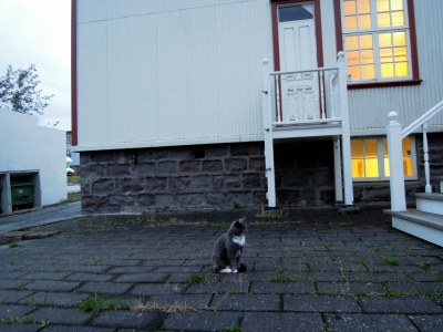 Grey and white cat at dusk