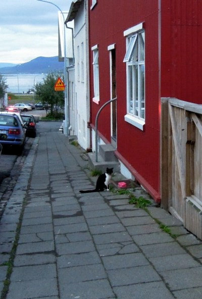 Black and white cat sitting next to a red house