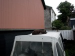 Fat greyish cat sleeping on top of a Jeep