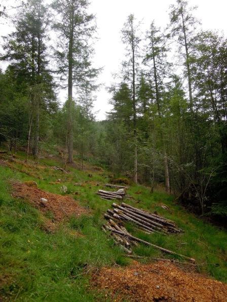 A logged area