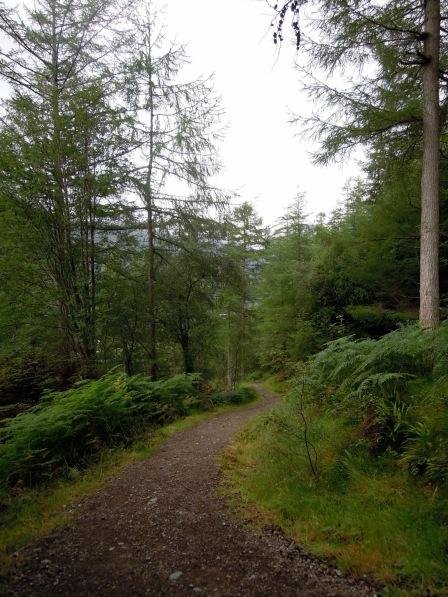 Curving trail