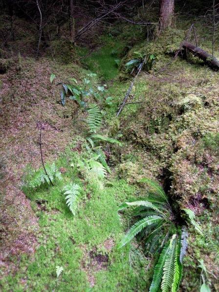 Greenery on the hillside