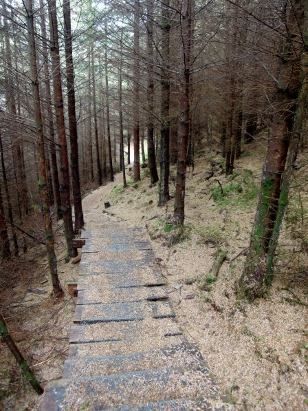 Path covered in brown evergreen needles