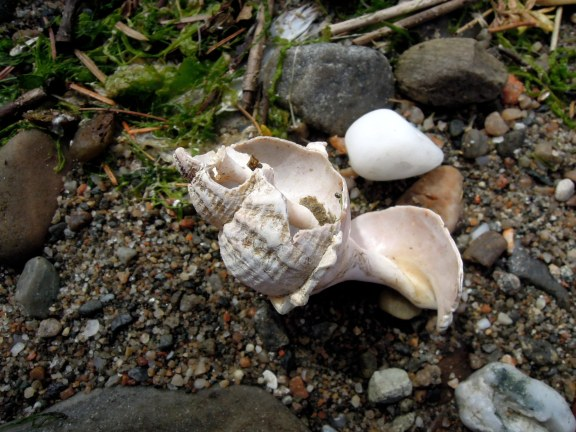 Spiraling small seashell with some of its sides worn away, revealing the center spire
