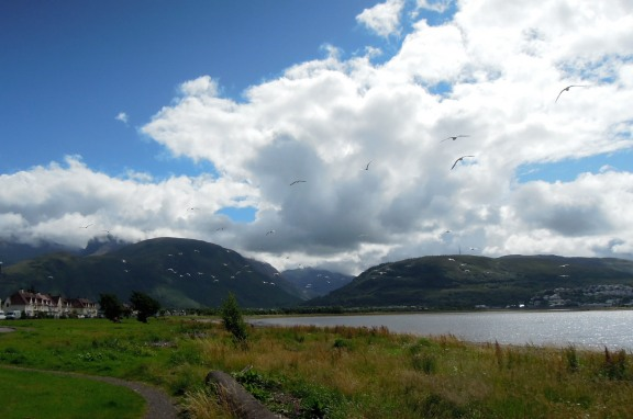 Birds flying through the air at Caol waterfront