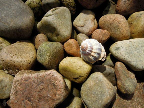 Tiny spiraling shell among brown and tan rocks