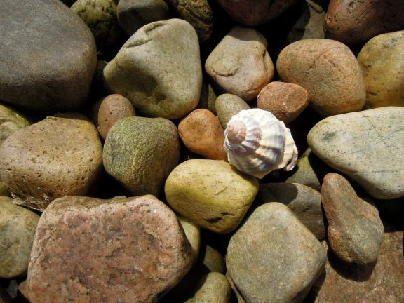 Tiny spiraling shell among brown and tan rocks