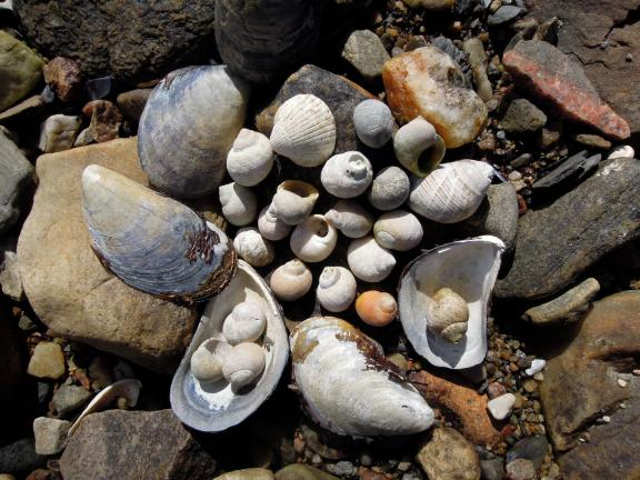Collection of mussel and snail shells