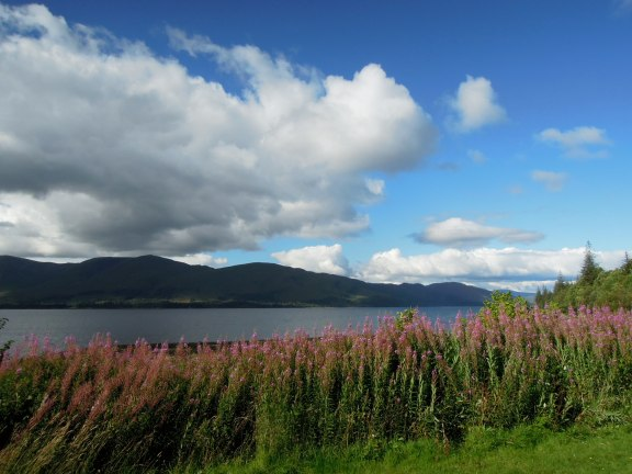 Loch Linnhe framed with mountains behind and pink flowers in front