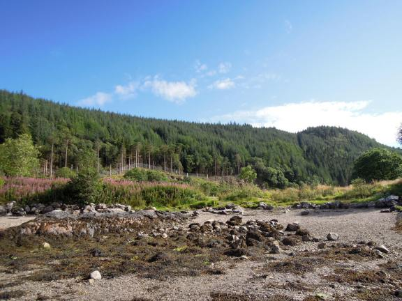 Evergreens on the mountain next to Loch Linnhe
