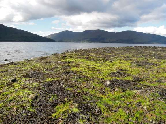 Seaweed covering the beach at Loch Linnhe