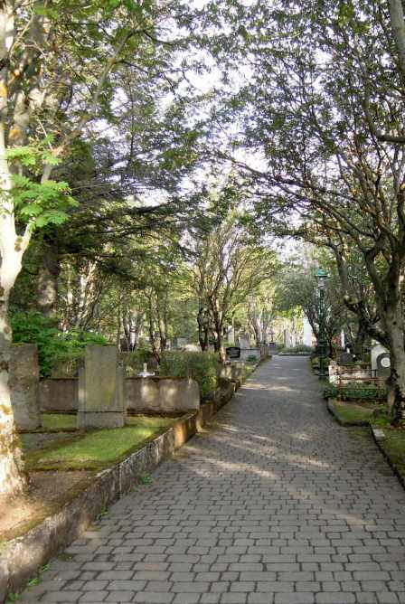 The only paved path I saw in the cemetery, with trees arching over