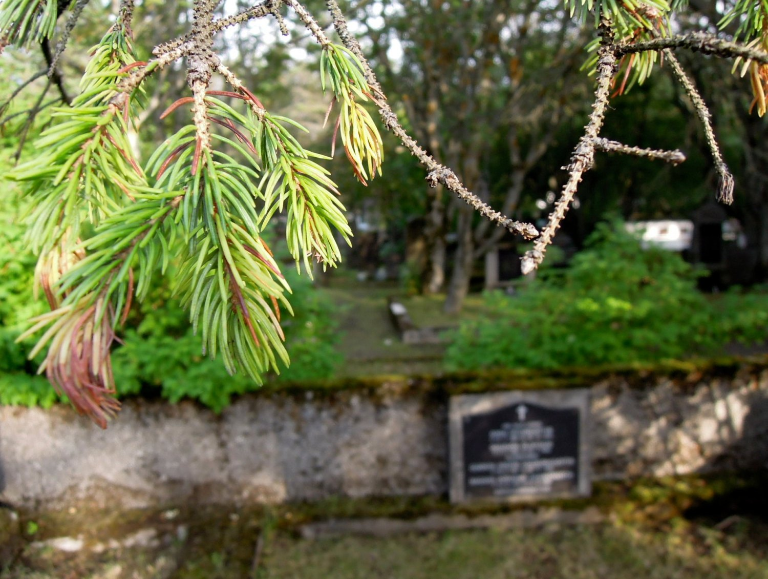 Pine branches overhanging a plot