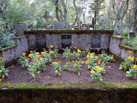 Family plot I think, with orange-red flowers